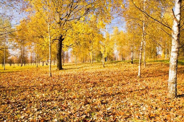 Loofbomen groeien in de herfst van het jaar