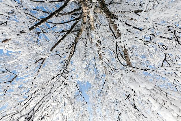 Loofbomen in de winter, winterweer in het park of bos en loofbomen, ijzige winter na sneeuwval met kale loofbomen