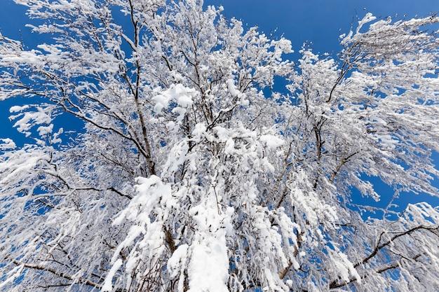 Loofbomen in de winter Premium Foto