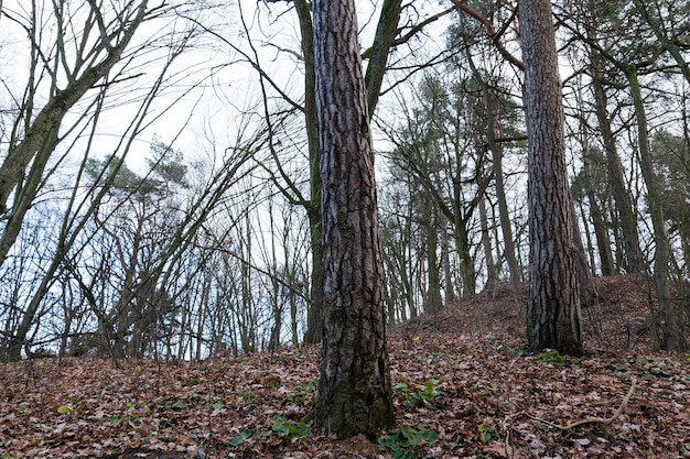 Loofbomen in het esdoornbos. herfstseizoen
