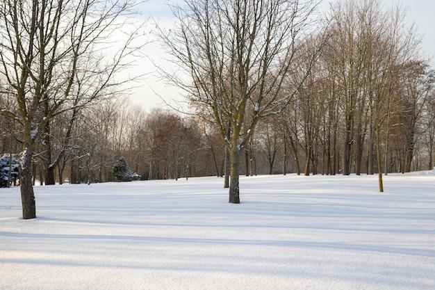 Loofbomen onder de sneeuw in het winterseizoen