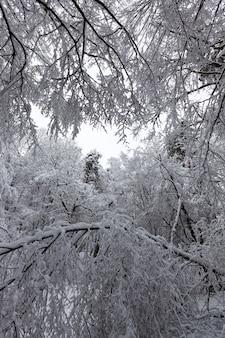 Loofbomen zonder gebladerte in het winterseizoen