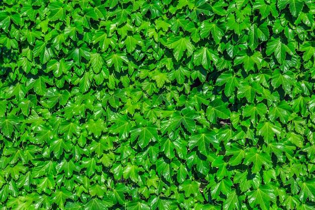 Loop gras steen bloesem oranje publiek