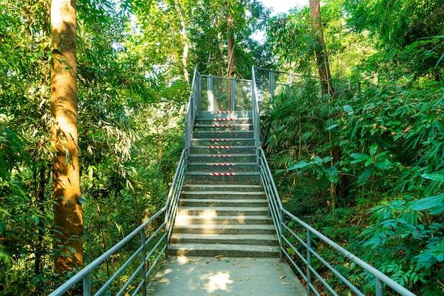 Loop weg in het bos bij canopy wandelingen bij queen sirikit botanische tuin chiang mai, thailand