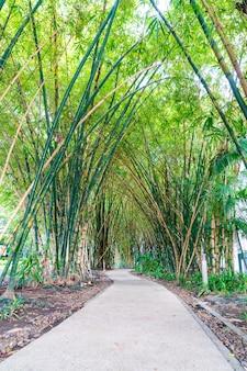 Loopbrug met bamboe