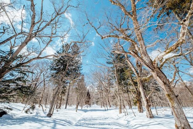 Loopbrug met sneeuw en droge boom, japan