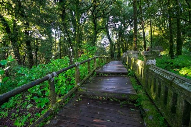 Loopbrug naar bos