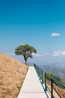 Loopbrug naar de boom en de blauwe lucht