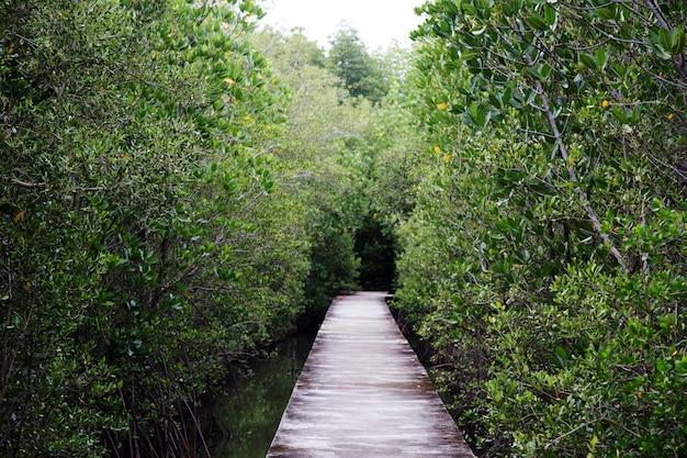 Loopbrug op mangrovebos in openbaar natuurpark in thailand