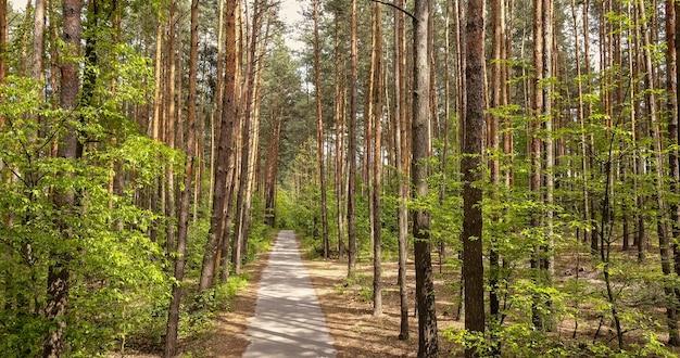 Loopbrug pad met groene bomen in het bos. mooi steegje in het park om te wandelen in een zonnige zomerdag.