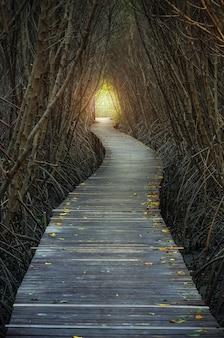 Loopbruggen naar het bos