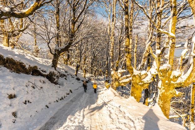 Lopend richting het natuurpark oianleku bij zonsopgang, besneeuwd beukenbos in de stad oiartzun in penas de aya, gipuzkoa. baskenland