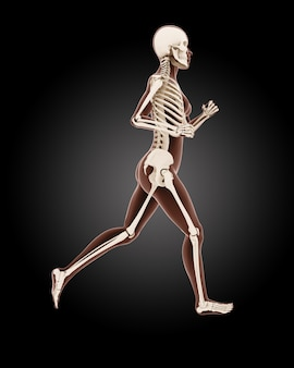 Lopend vrouwelijk medisch skelet