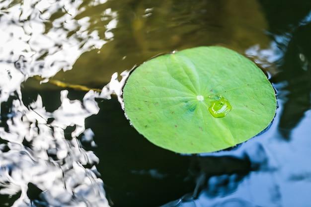 Lotus-blad met waterdalingenachtergrond