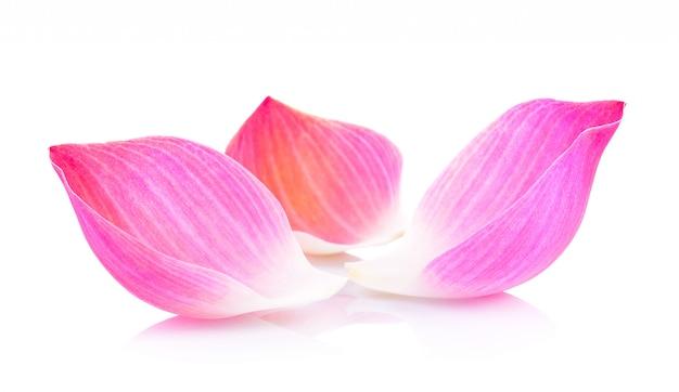 Lotus-bloemblaadje op witte muur