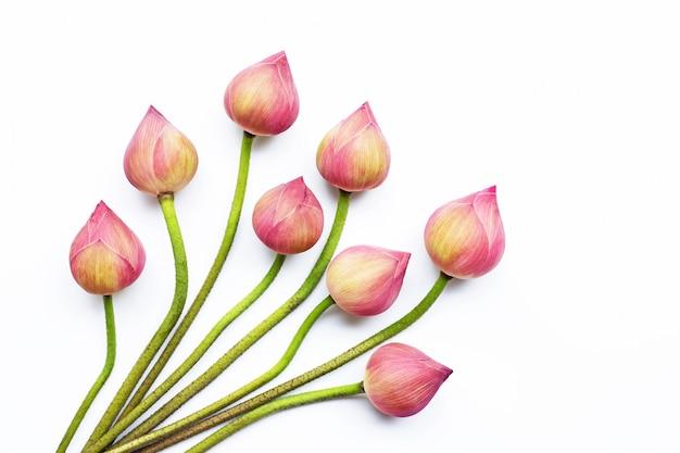 Lotus-bloemen op wit.