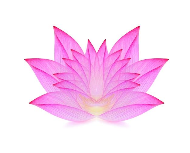 Lotus geïsoleerd op wit oppervlak.