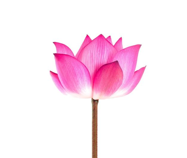 Lotus geïsoleerd op wit.