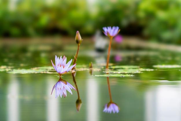 Lotus-installatie in bandung, indonesië wordt gevestigd dat