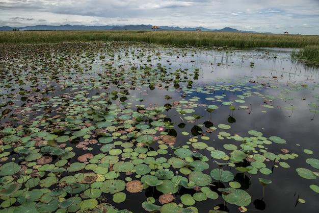 Lotus-meer met het landschap van de kalksteenberg bij het nationale park van khao sam roi yod, provincie prachuap khiri khanthailand.