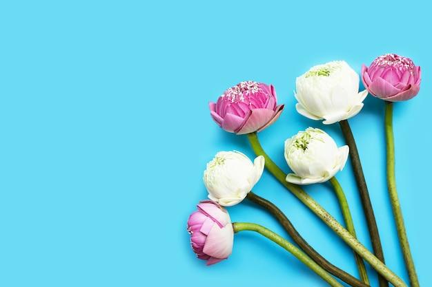 Lotusbloem. bovenaanzicht