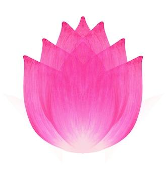 Lotusbloem geïsoleerd op wit