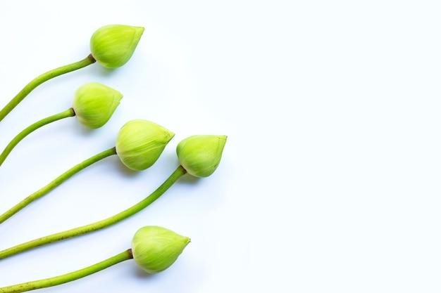 Lotusbloem geïsoleerd