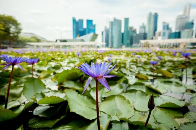 Lotusbloemen op het oppervlak van wolkenkrabbers in singapore