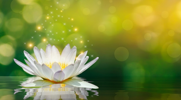 Lotuswit lichtpaars drijvend licht schittert