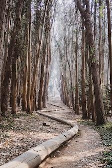 Lover's lane trail
