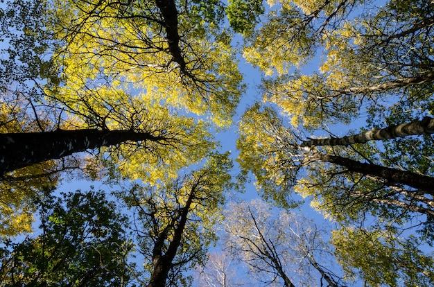 Low-angle shot van de hoge bloemen tegen de blauwe lucht op een zonnige dag