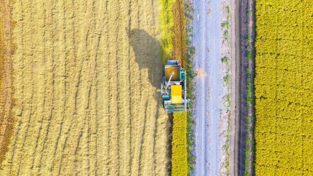 Lucht hoogste mening van maaimachinemachine die hierboven in padieveld werken van