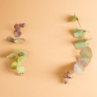 Lucht mening van eucalyptustakje over perzikachtergrond