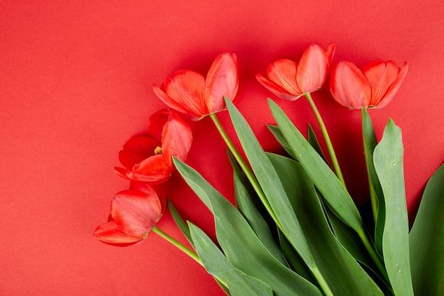 Lucht mening van rode tulpen die op rood wordt geïsoleerd.