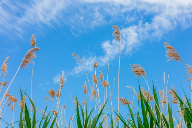 Lucht met witte wolken en groene stokken op het eerste plan