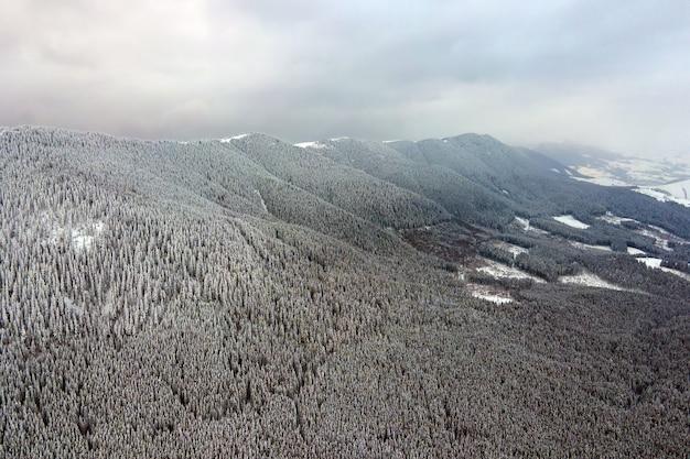 Lucht mistig landschap met groenblijvende pijnbomen bedekt met vers gevallen sneeuw na zware sneeuwval in het winterbergbos op koude rustige avond.