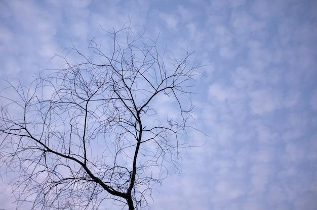 Lucht, wolken en takken