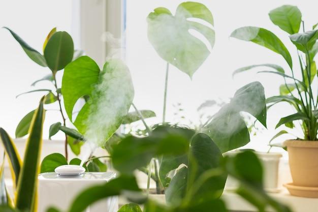 Luchtbevochtiger in het appartement de planten lucht meesleuren en zuiveren in het opotypische seizoen