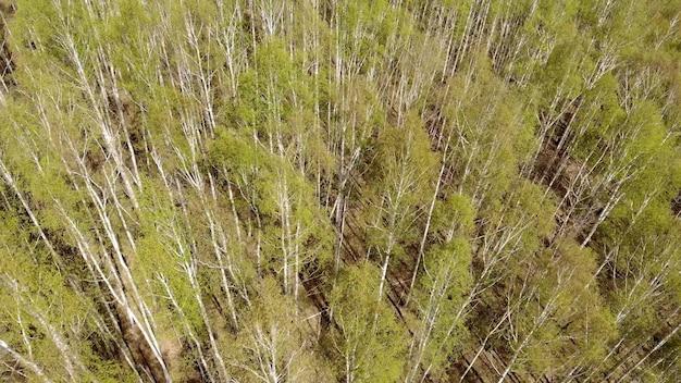 Luchtdrone die over de gevolgen van bosbrand vliegt. herstel van het milieu na een ramp. camera kantelt naar beneden en gaat omhoog en opent panorama.