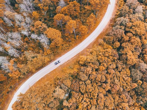 Luchtfoto auto op weg bos boom milieu bos natuur achtergrond, textuur van geel oranje boom en dode boom bovenaanzicht bos van bovenaf landschap vogelperspectief dennenbos herfst oranje stormloop