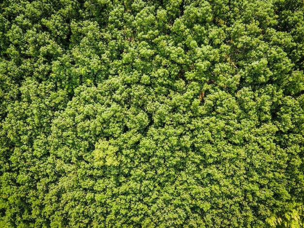 Luchtfoto bos boom milieu bos natuur achtergrond groene boom bovenaanzicht bos van bovenaf