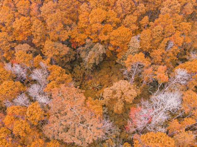 Luchtfoto bos boom milieu bos natuur achtergrond, textuur van geel oranje boom en dode boom bovenaanzicht bos van bovenaf landschap vogelperspectief dennenbos herfst oranje stormloop