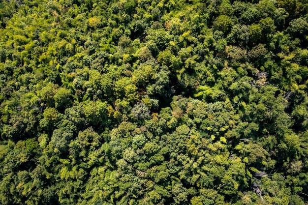 Luchtfoto bovenaanzicht bos boom, in het regenwoud ecosysteem en gezonde omgeving concept en achtergrond, textuur van groene boom bos uitzicht vanaf drone fotografie