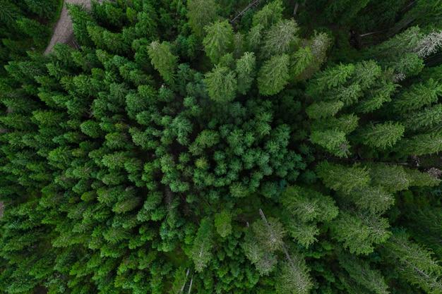 Luchtfoto bovenaanzicht bos, textuur van bos uitzicht van bovenaf, copter drone uitzicht, panoramische foto over de toppen van dennenbos