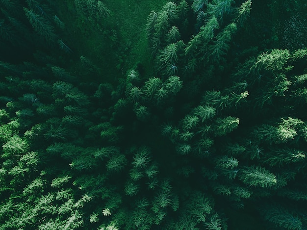 Luchtfoto bovenaanzicht dennenbos boszicht van bovenaf pad door het groene bos en het platteland