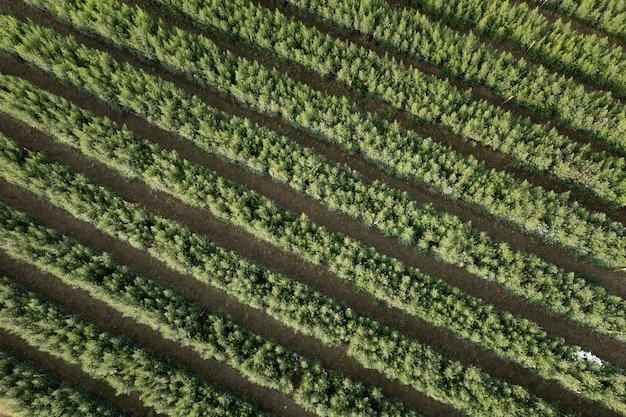 Luchtfoto bovenaanzicht tuin groene bloem in een rij abstracte achtergrond in thai