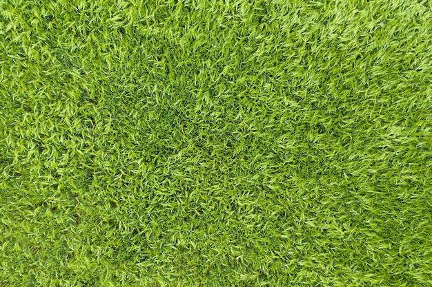 Luchtfoto bovenaanzicht van groen veld