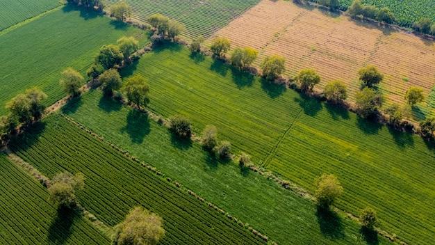 Luchtfoto bovenaanzicht van landbouw veld