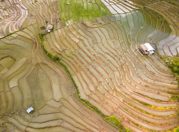 Luchtfoto bovenaanzicht van rijstvelden, groene landbouwvelden op het platteland