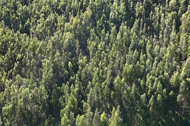 Luchtfoto detail van eucalyptusbossen in ocopilla